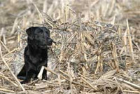 Greenhead Gear Ground Snow Cover for Force Dog Blind