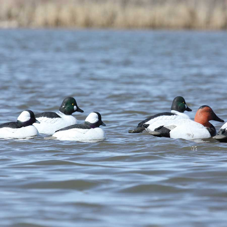 Avery Over-Size Series Diver Combo Decoys, 6-Pack_2.jpg