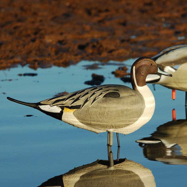 Greenhead Gear Over-Sized Series Full Body Pintails W/ Real Motion System Active
