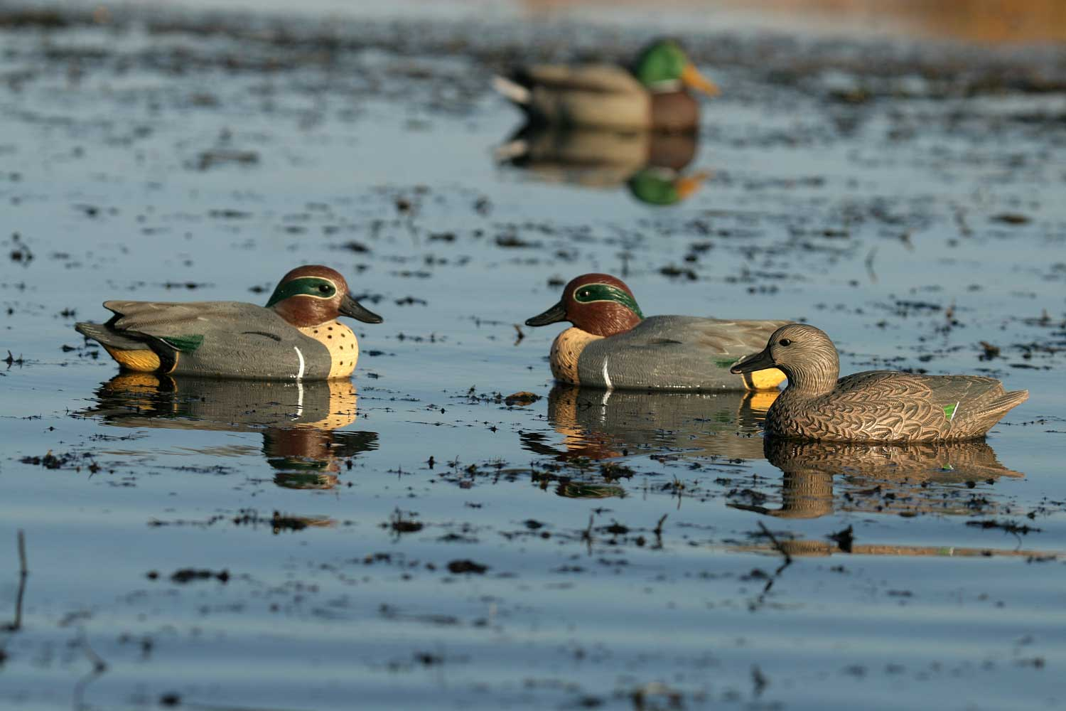 Avery GHG Life-Sized Floating Green-Winged Teal Decoys, 6 Pack_7.jpg
