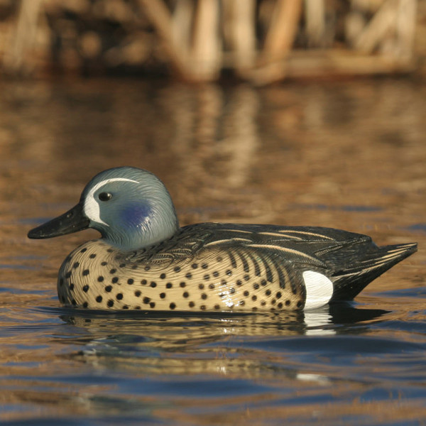 Avery GHG Life-Size Blue Winged Teal Duck Decoys, 6 Pack