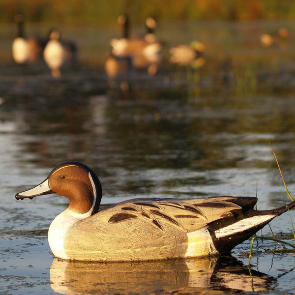 Avery GHG Life-Size Pintails, 6 Pack