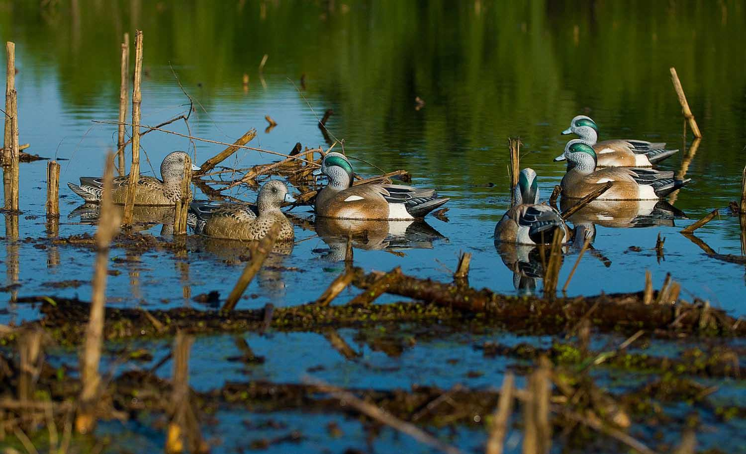 Avery GHG Life-Size Wigeons, 6 Pack_2.jpg