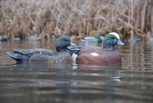 Avery GHG Life-Size Wigeons, 6 Pack
