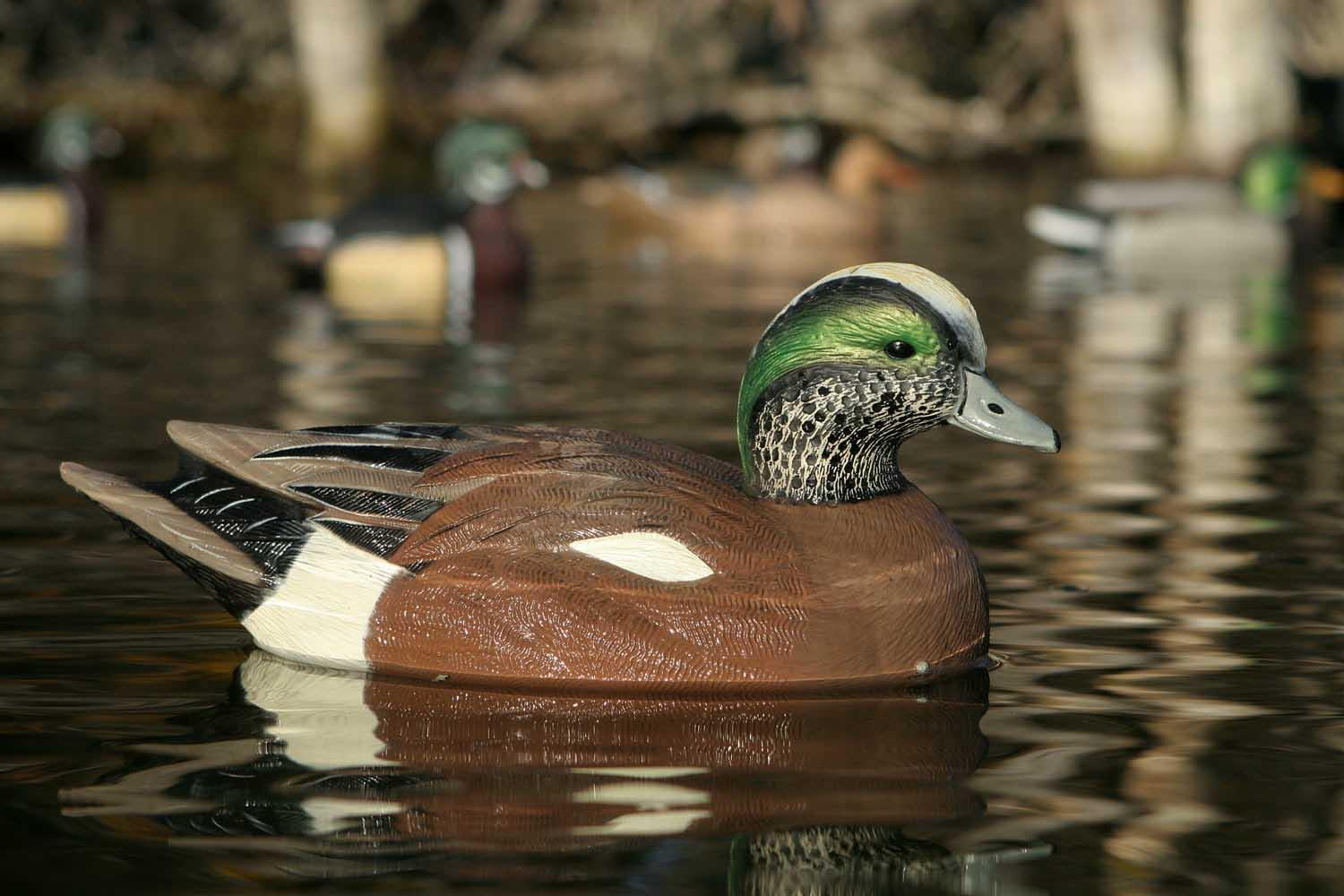 Avery GHG Life-Size Wigeons, 6 Pack_6.jpg