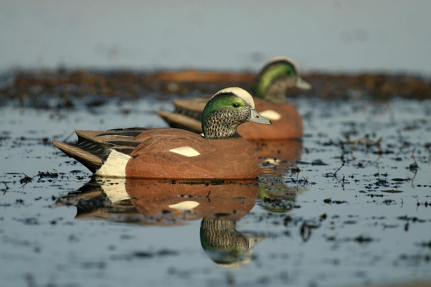 Avery GHG Life-Size Wigeons, 6 Pack_8.jpg