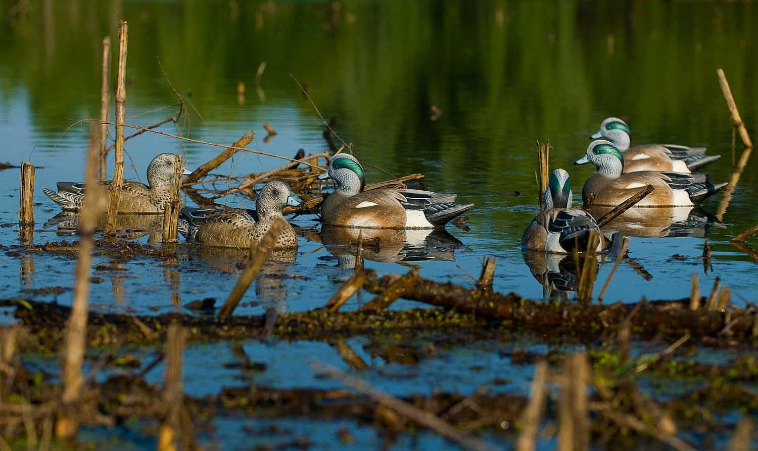 Avery GHG Life-Size Wigeons, 6 Pack_9.jpg