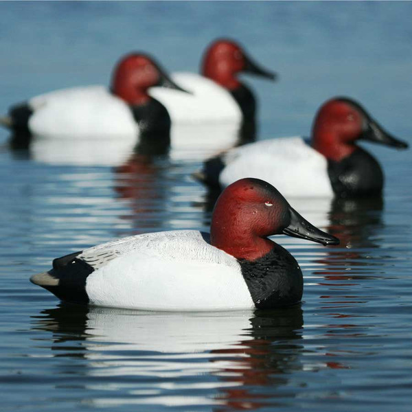 Avery GHG Over-Size Series Canvasbacks, 6 Pack