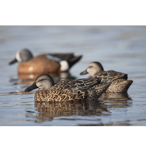 Avery Pro-Grade Blue-Winged Teal Early Season Hen Pack_3.png
