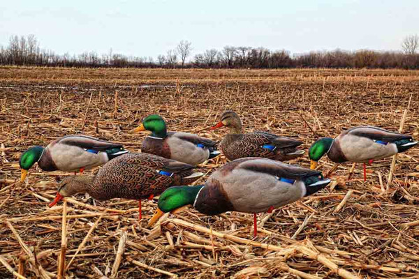 Avian-X AXP Over-Sized Full Body Mallard Decoys - 6 Pack with Slotted Decoy Bag