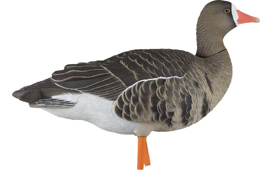 Avian-X AXP Painted Fusion Specklebelly Geese, 6 Pack_6.jpg