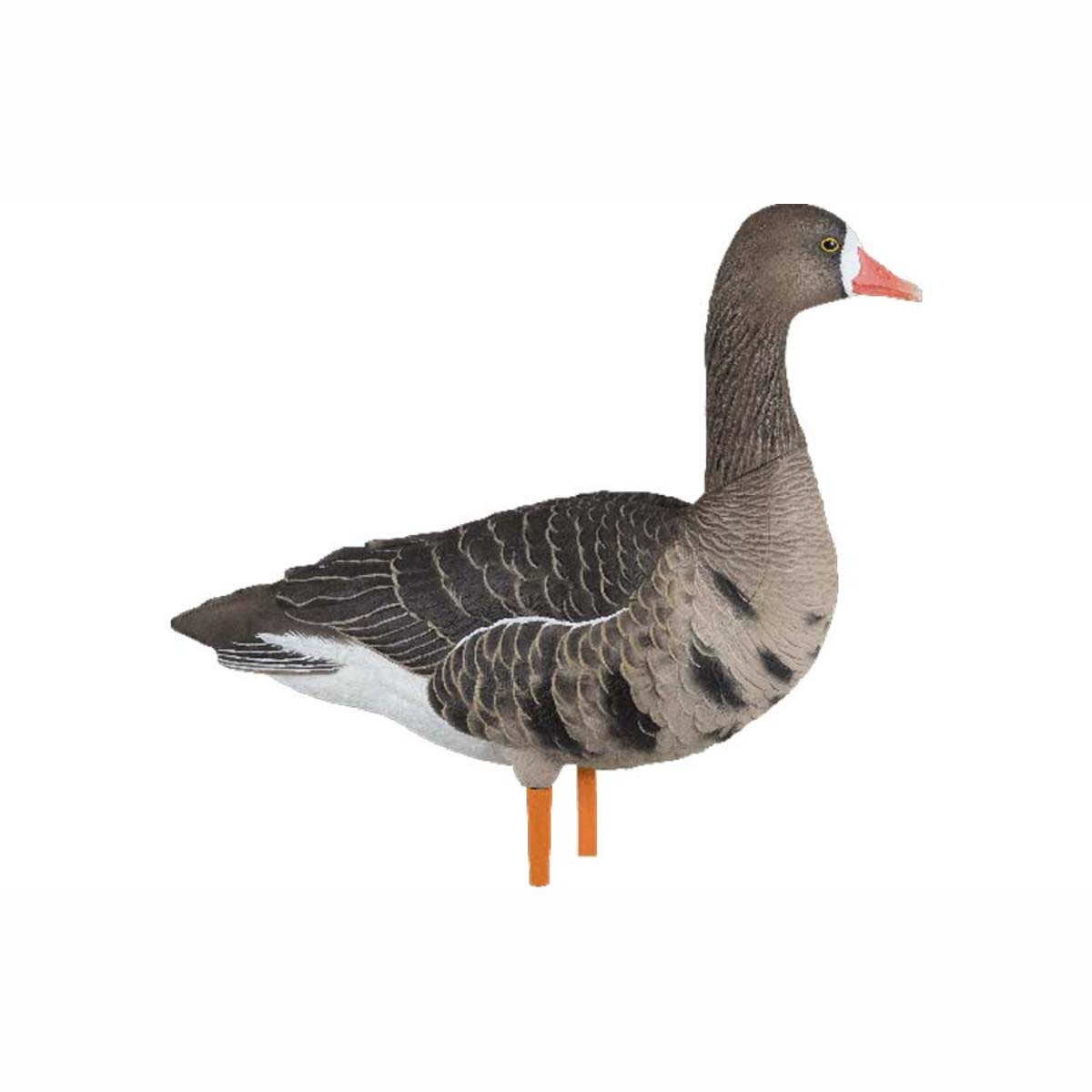 Avian-X AXF Flocked Fusion Specklebelly Geese, 6 Pack_1.jpg