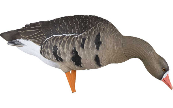 Avian-X AXF Flocked Fusion Specklebelly Geese, 6 Pack