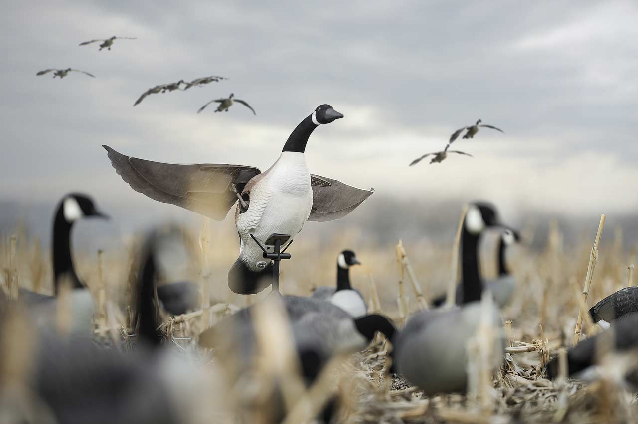 Lucky Flapper Canada Goose with Remote_2.jpg