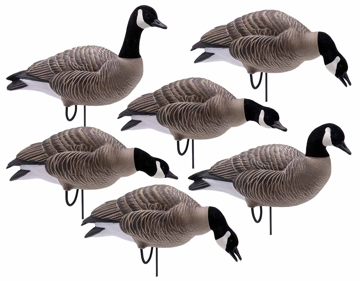 Final Approach HD Full Body Lessers, 6 Pack with Flocked Heads