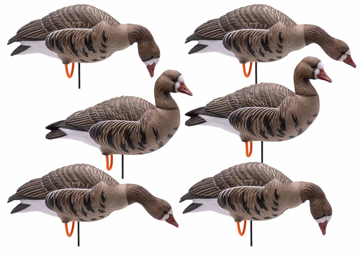 Final Approach HD Full Body Specklebelly Goose Decoys, 6 Pack