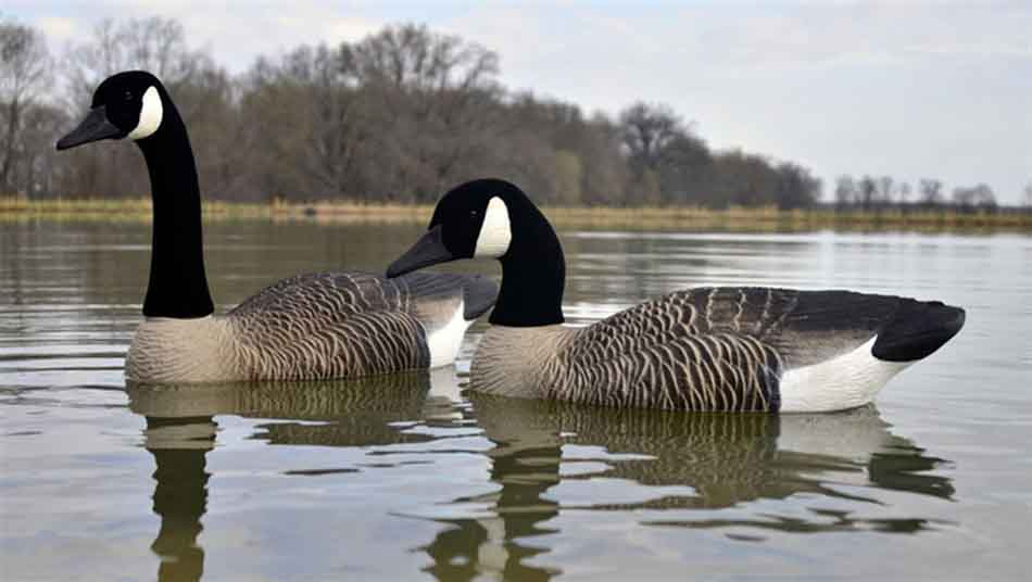 Higdon Full Size Foam Filled Canada Goose Floaters, 4 Pack