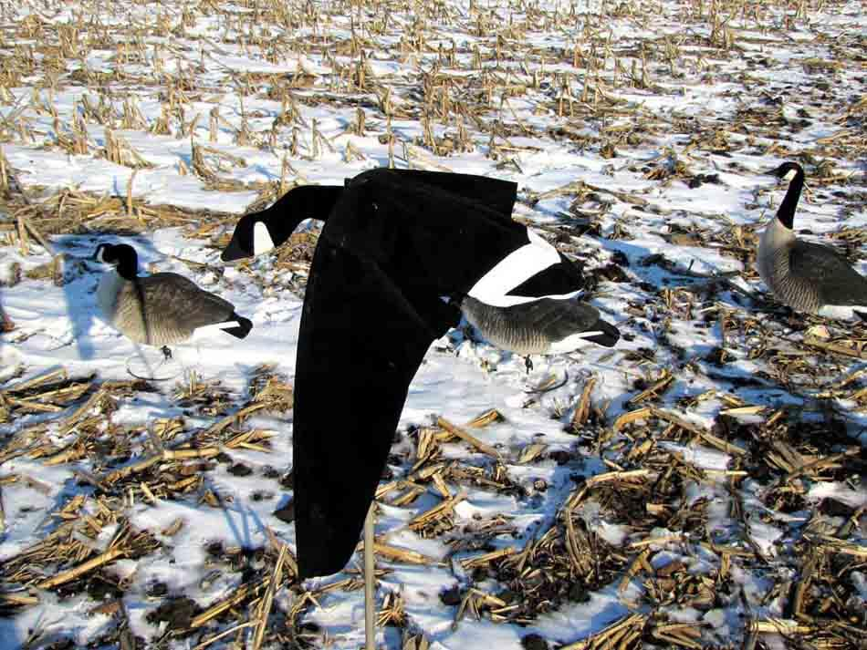 Heavy Hauler Cupped and Committed Motion Decoy, Canada Goose Single Pack_4.jpg