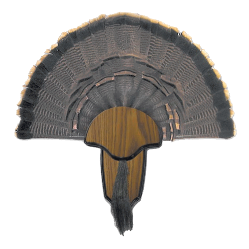 Hunter's Specialties Turkey Tail & Beard Mounting Kit_1.png
