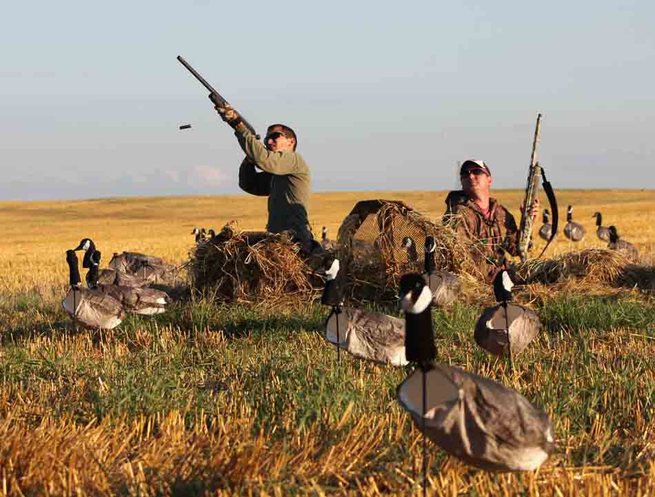 White Rock Decoys Canada Goose Decoys - 12 Pack_2.jpg