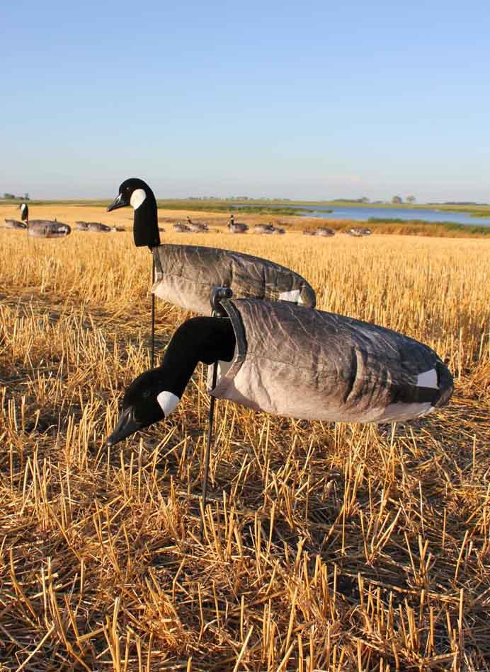 White Rock Decoys Canada Goose Decoys - 12 Pack_3.jpg